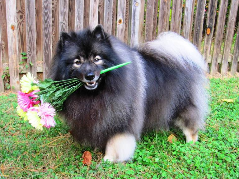 Clancy holding flowers