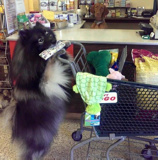Clancy shopping